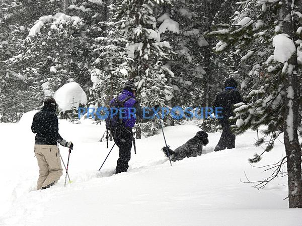 Nordic, family, skiing, dog, group, poodle, winter, snow, Routt, forest, Steamboat, Springs, Colorado, CO, Ken Proper