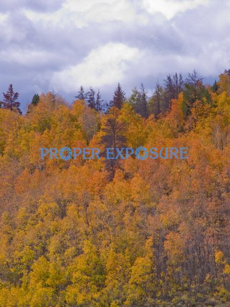 fall, foliage, fall foliage, aspen, evergreen, spruce, scrub oak, clouds, cloudy sky