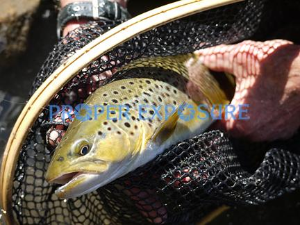 brown trout, fishing, net, catch & release, Green River, Utah