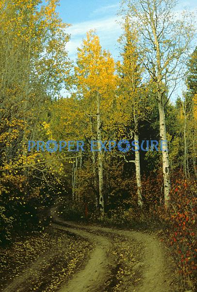 Fall foliage, aspen colors, Emerald mountain, road, Steamboat Springs, Colorado, Rocky Mountains, Ken Proper,