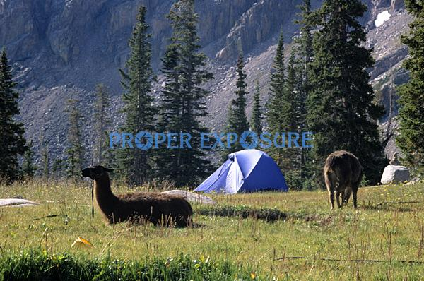 Ken Proper, Proper Exposure, Steamboat Springs, Colorado, Routt County, Rocky Mountains, USA, Zirkel Widerness, Camping Hiking, llamas, pack animal